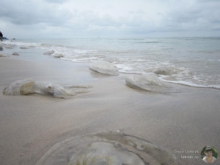Медузы на пляже Хуа Хина