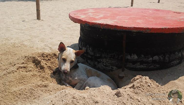 Собака на пляже Ча-Ама