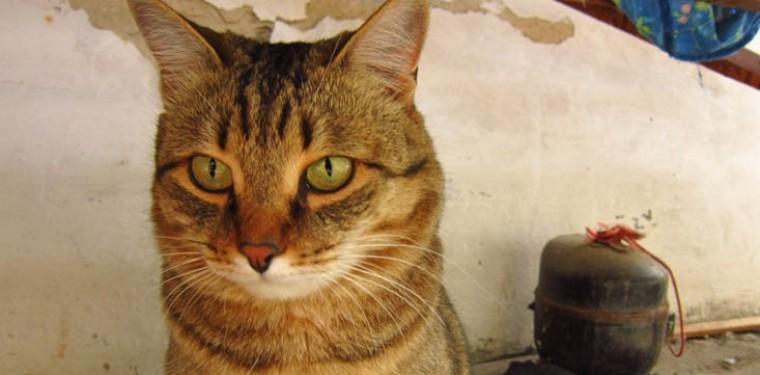 Про моего кота Бакса
