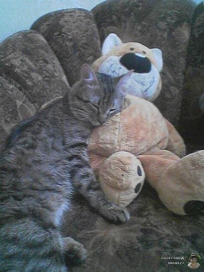 Любовь котов