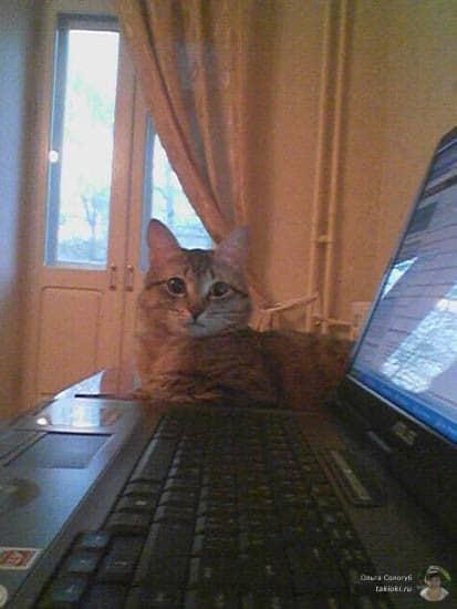 Любимое место кота когда я за компом