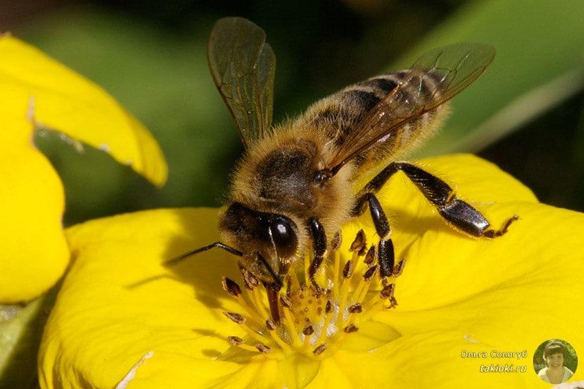 Маска из пчелиного яда
