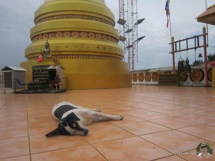 собака медитирует