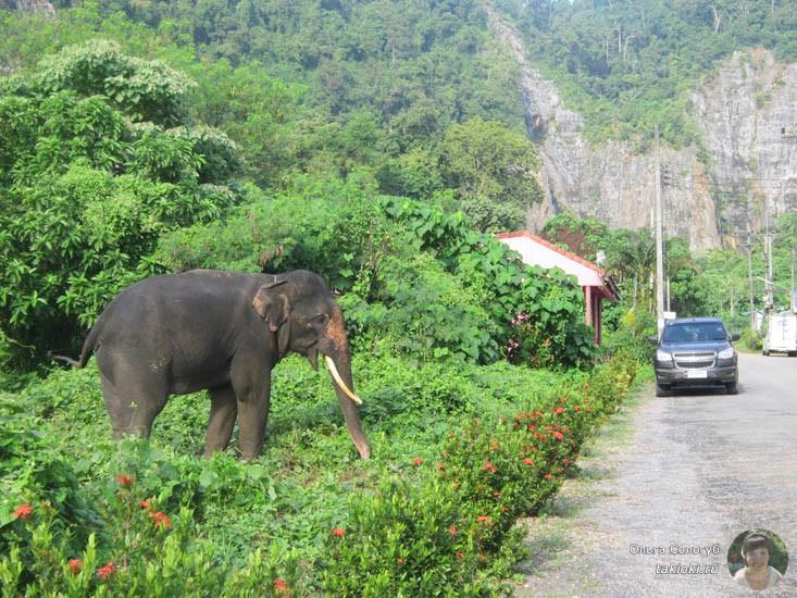 слон на обочине жует траву