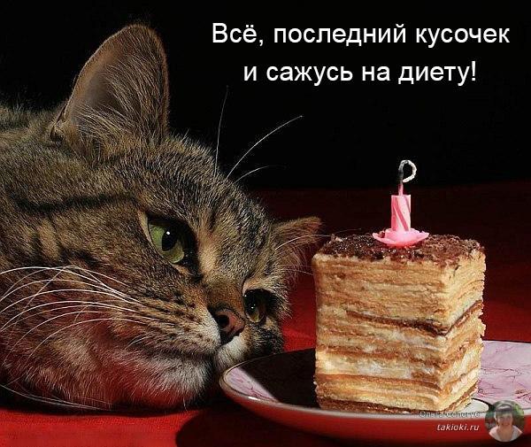 кот и последний кусочек торта