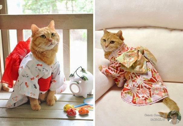 4-sedobnye-koty