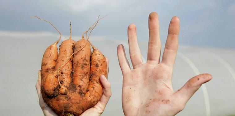 Овощи «нестандарт» — выкидывать нельзя, кушать!