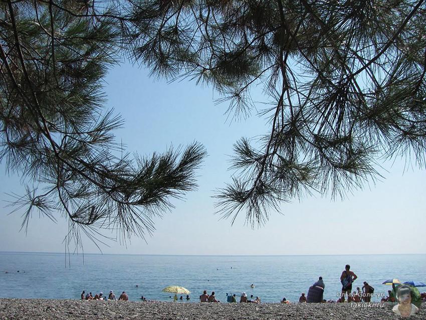пляж под соснами