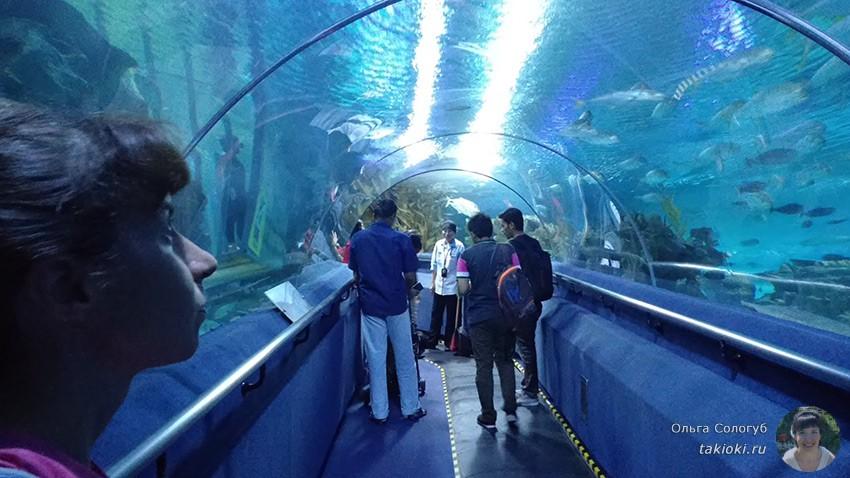 7-okeanarium