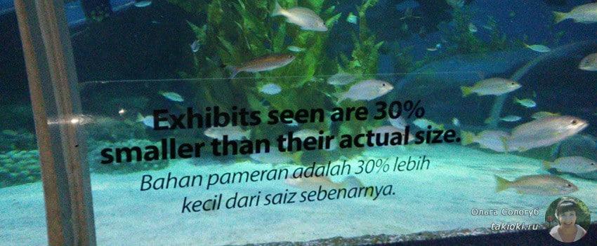 8-okeanarium