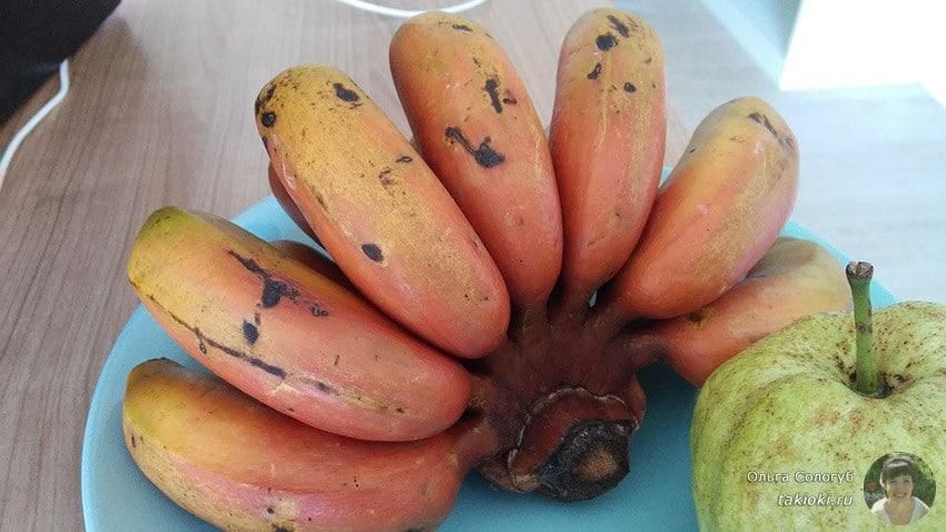 1-polza-bananov