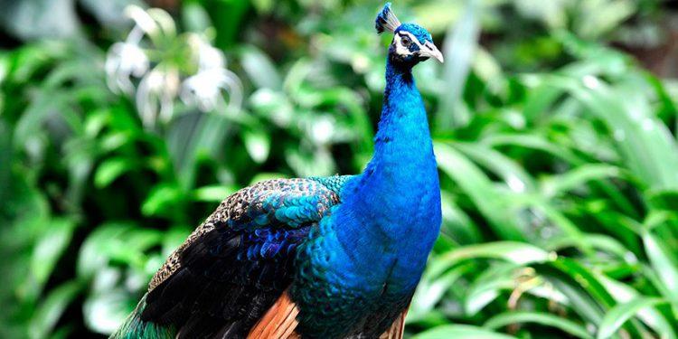 Удивительное разнообразие птиц можно увидеть в огромном причьем парке города Куала-Лумпур