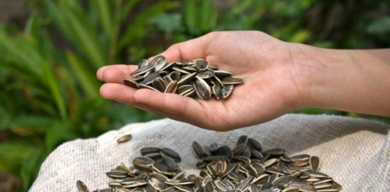 Можно ли есть сырые или жареные семечки при похудении и различных диетах