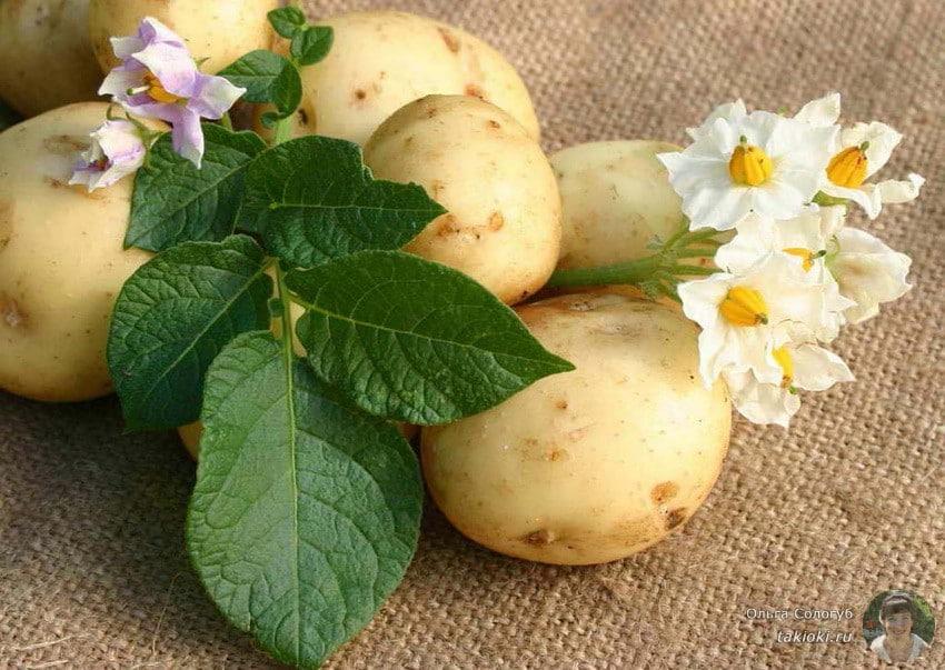 можно ли вареную картошку на диете дюкана