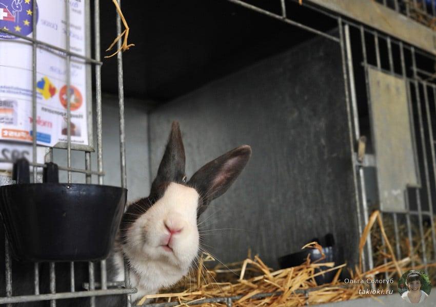 маринад для кролика с майонезом