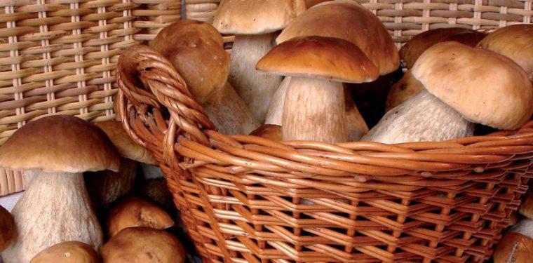 3 потрясающих варианта как мариновать белые грибы в домашних условиях + что можно приготовить из них