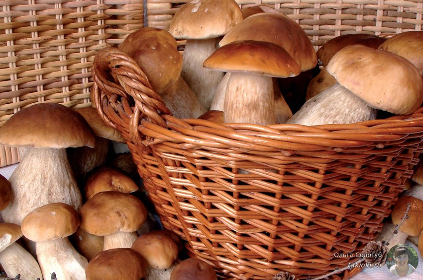 Уникальные свойства белых грибов