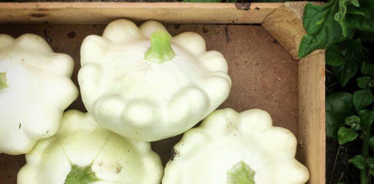 Простые и вкусные рецепты маринованных патиссонов, которые сохранят на зиму всю пользу овощей
