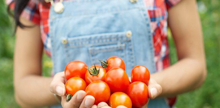 Как приготовить вкусную закуску за сутки: рецепты маринованных помидор быстрого приготовления