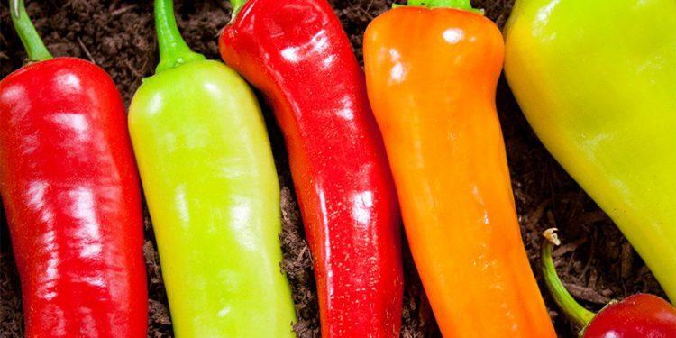 Простые рецепты острого маринованного перца, нюансы и особенности его приготовления