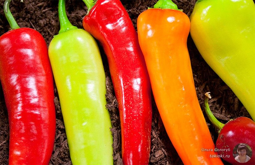 польза и вред маринованного острого перца