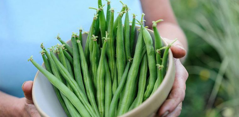 Сохраняем овощи для правильного питания на зиму: рецепты маринованной спаржевой фасоли